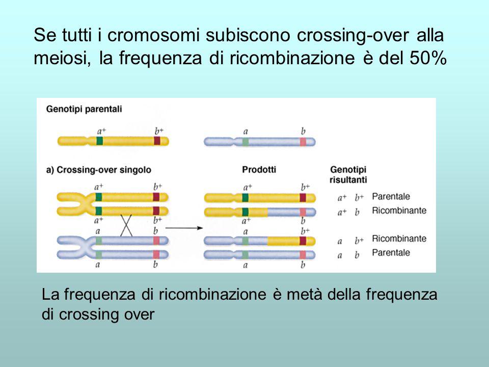 Se tutti i cromosomi subiscono crossing-over alla meiosi, la frequenza di ricombinazione è del 50%