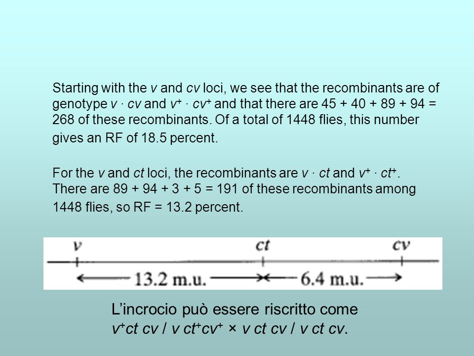 Starting with the v and cv loci, we see that the recombinants are of genotype v · cv and v+ · cv+ and that there are 45 + 40 + 89 + 94 = 268 of these recombinants. Of a total of 1448 flies, this number gives an RF of 18.5 percent.