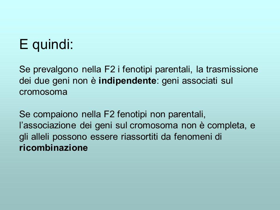 E quindi: Se prevalgono nella F2 i fenotipi parentali, la trasmissione dei due geni non è indipendente: geni associati sul cromosoma.