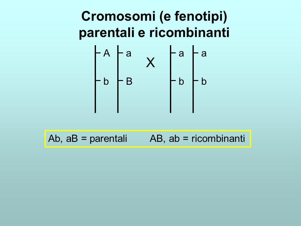 Cromosomi (e fenotipi) parentali e ricombinanti