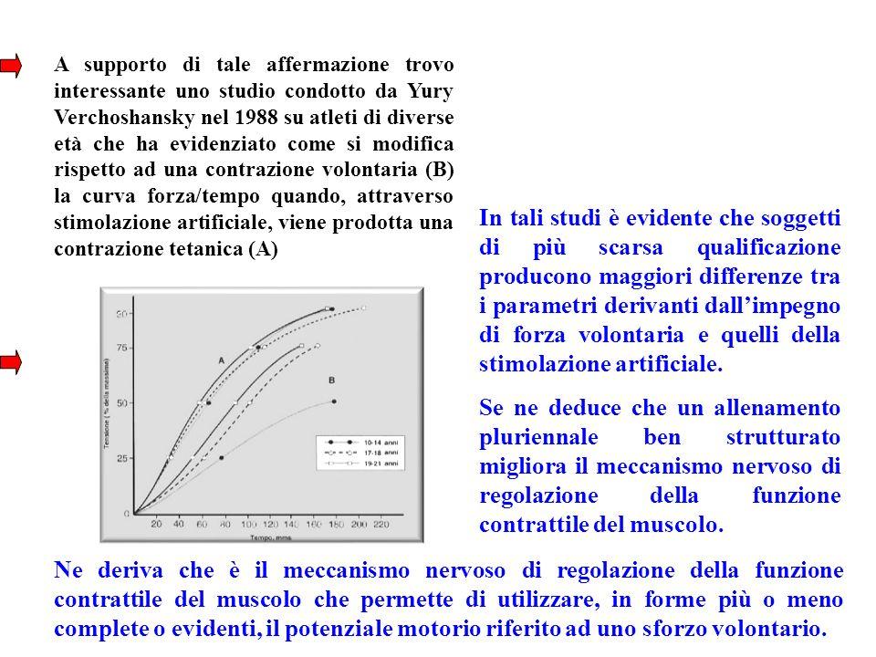 A supporto di tale affermazione trovo interessante uno studio condotto da Yury Verchoshansky nel 1988 su atleti di diverse età che ha evidenziato come si modifica rispetto ad una contrazione volontaria (B) la curva forza/tempo quando, attraverso stimolazione artificiale, viene prodotta una contrazione tetanica (A)