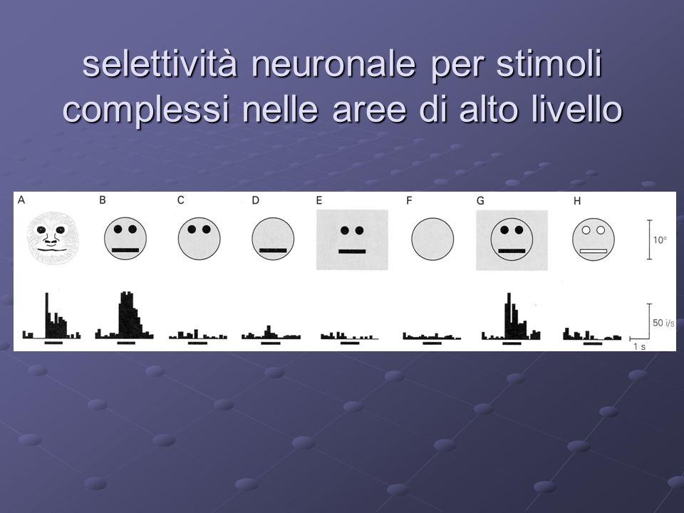 selettività neuronale per stimoli complessi nelle aree di alto livello