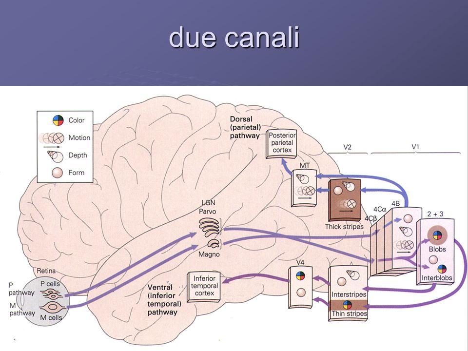 due canali …e il significato funzionale di tale suddivisione