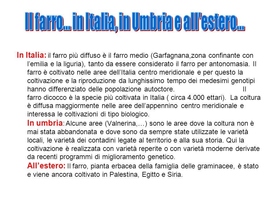 Il farro... in Italia, in Umbria e all estero...