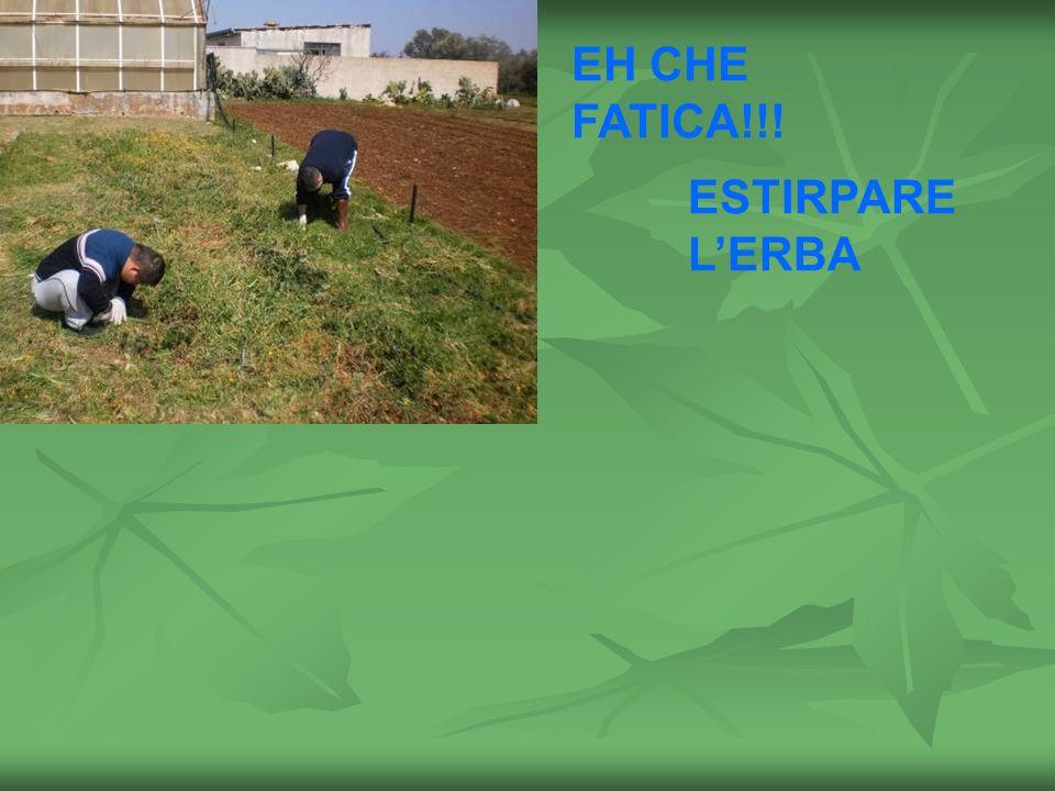 EH CHE FATICA!!! ESTIRPARE L'ERBA