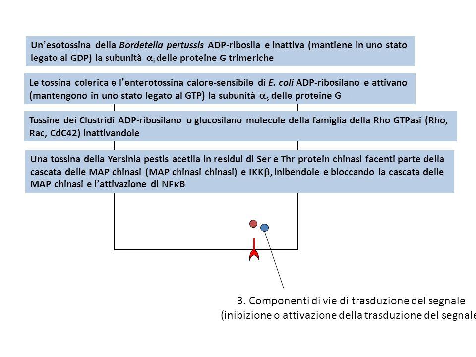 3. Componenti di vie di trasduzione del segnale