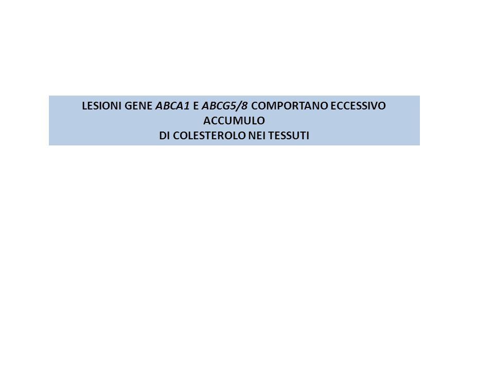 LESIONI GENE ABCA1 E ABCG5/8 COMPORTANO ECCESSIVO ACCUMULO