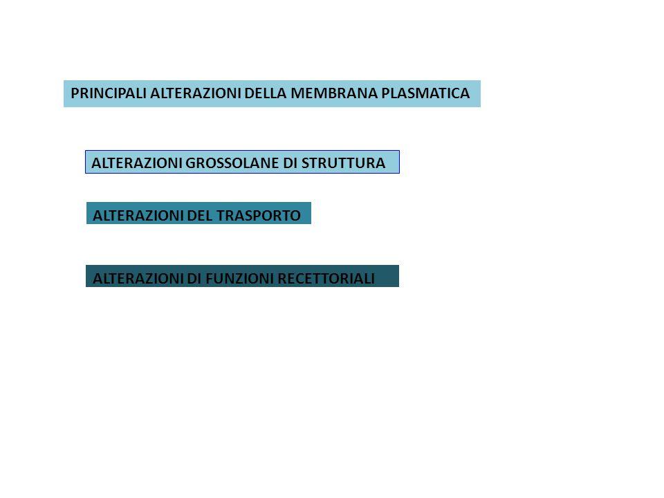 PRINCIPALI ALTERAZIONI DELLA MEMBRANA PLASMATICA