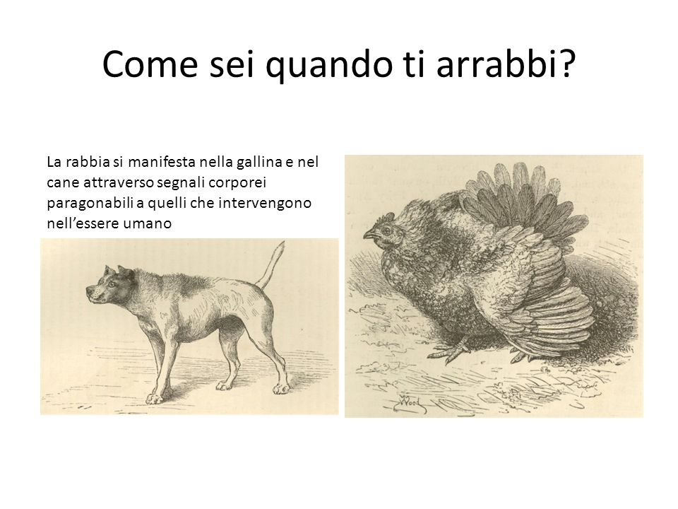 Come sei quando ti arrabbi
