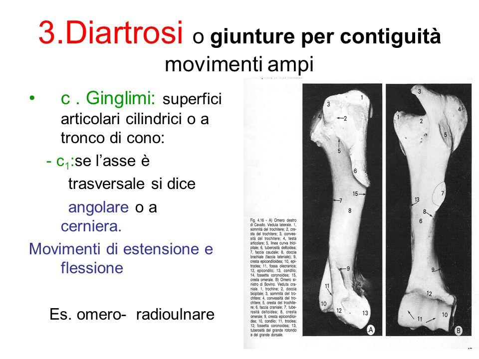 3.Diartrosi o giunture per contiguità movimenti ampi