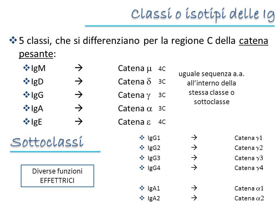 Classi o isotipi delle Ig