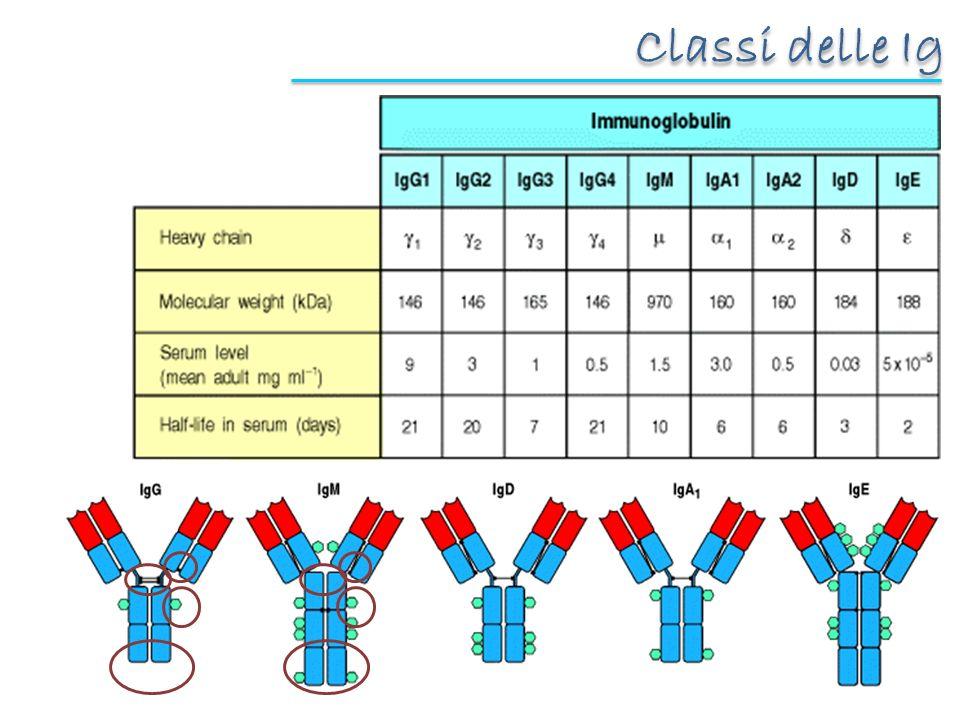Classi delle Ig