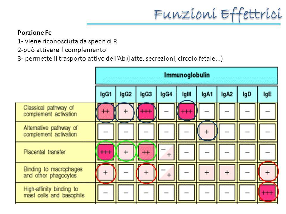 Funzioni Effettrici Porzione Fc 1- viene riconosciuta da specifici R