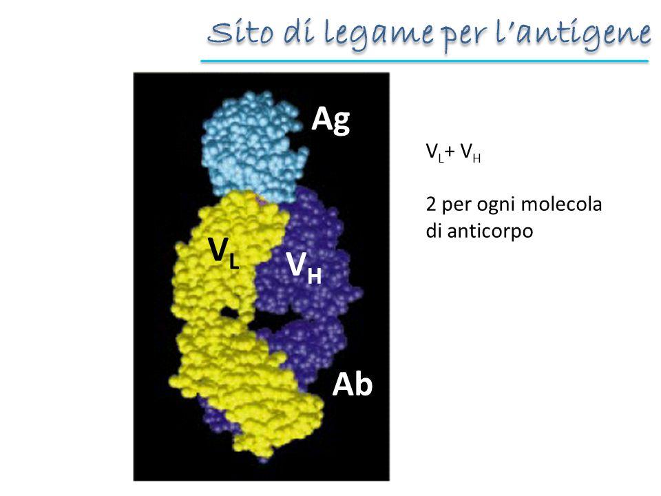 Sito di legame per l'antigene