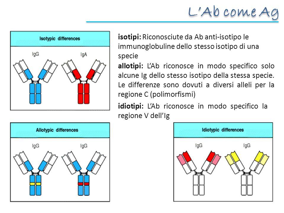 L'Ab come Ag isotipi: Riconosciute da Ab anti-isotipo le immunoglobuline dello stesso isotipo di una specie.