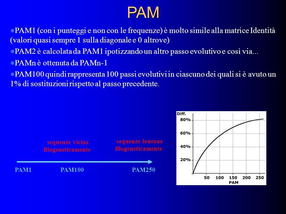 PAM PAM1 (con i punteggi e non con le frequenze) è molto simile alla matrice Identità (valori quasi sempre 1 sulla diagonale e 0 altrove)