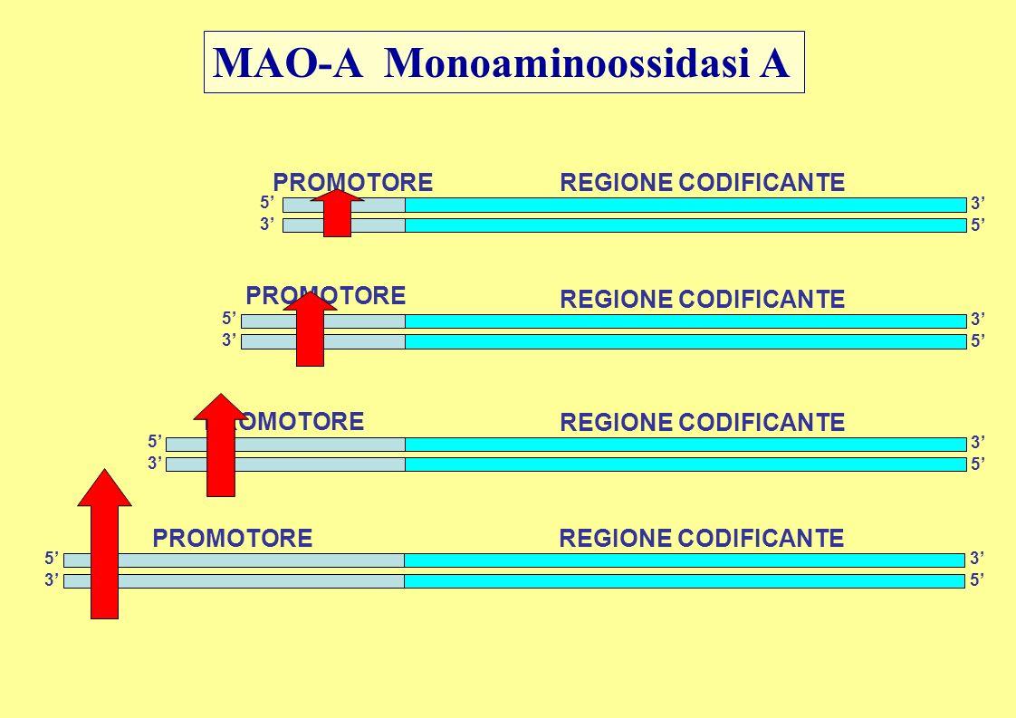 MAO-A Monoaminoossidasi A