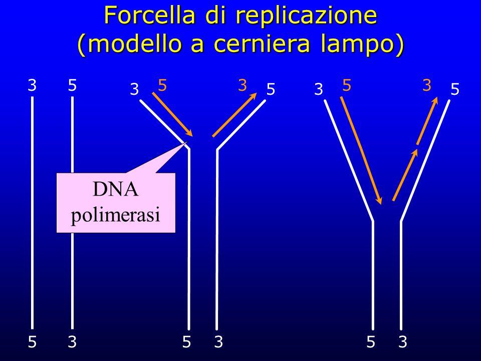 Forcella di replicazione (modello a cerniera lampo)