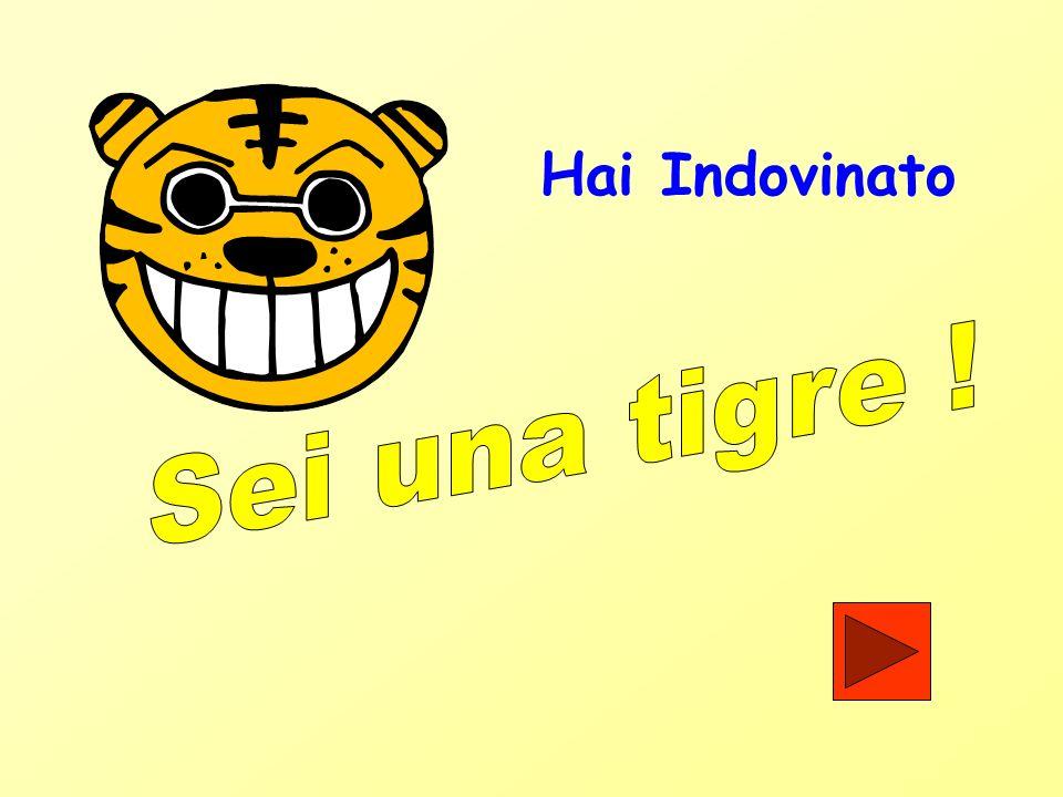 Hai Indovinato Sei una tigre !