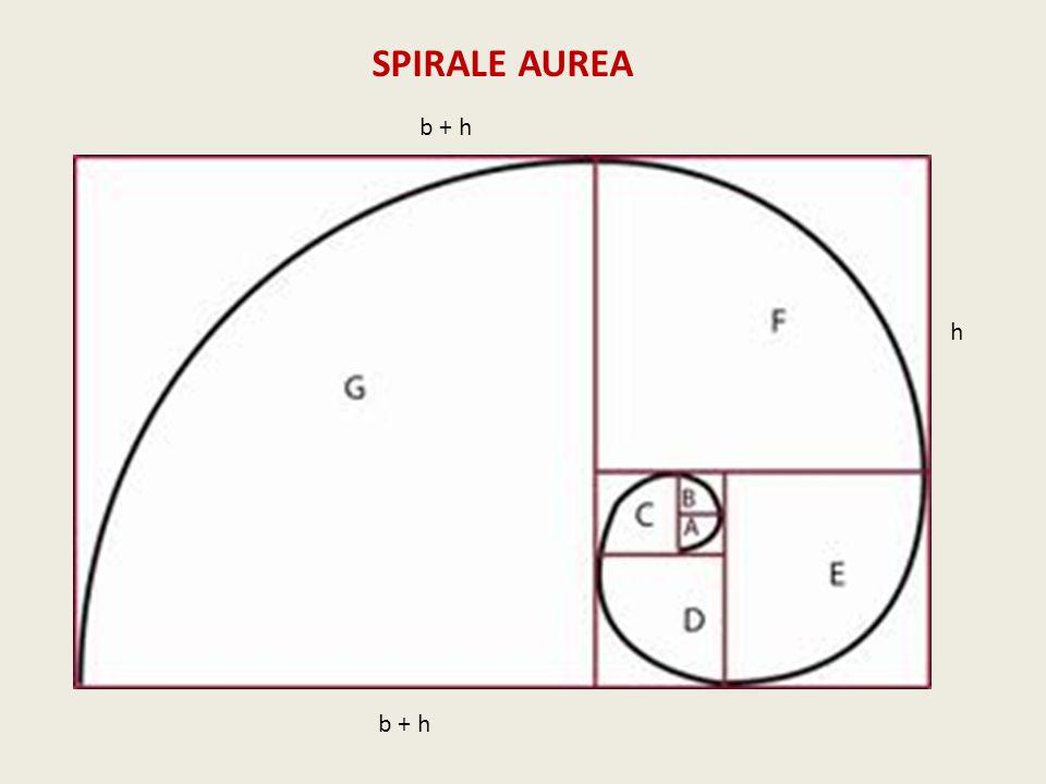SPIRALE AUREA b + h h b + h