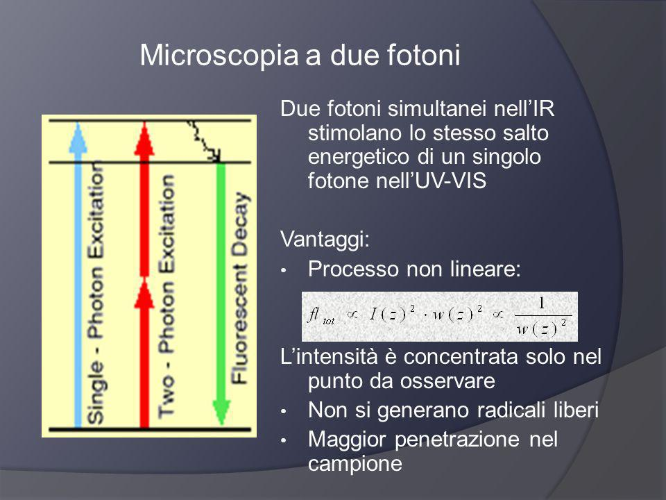 Microscopia a due fotoni