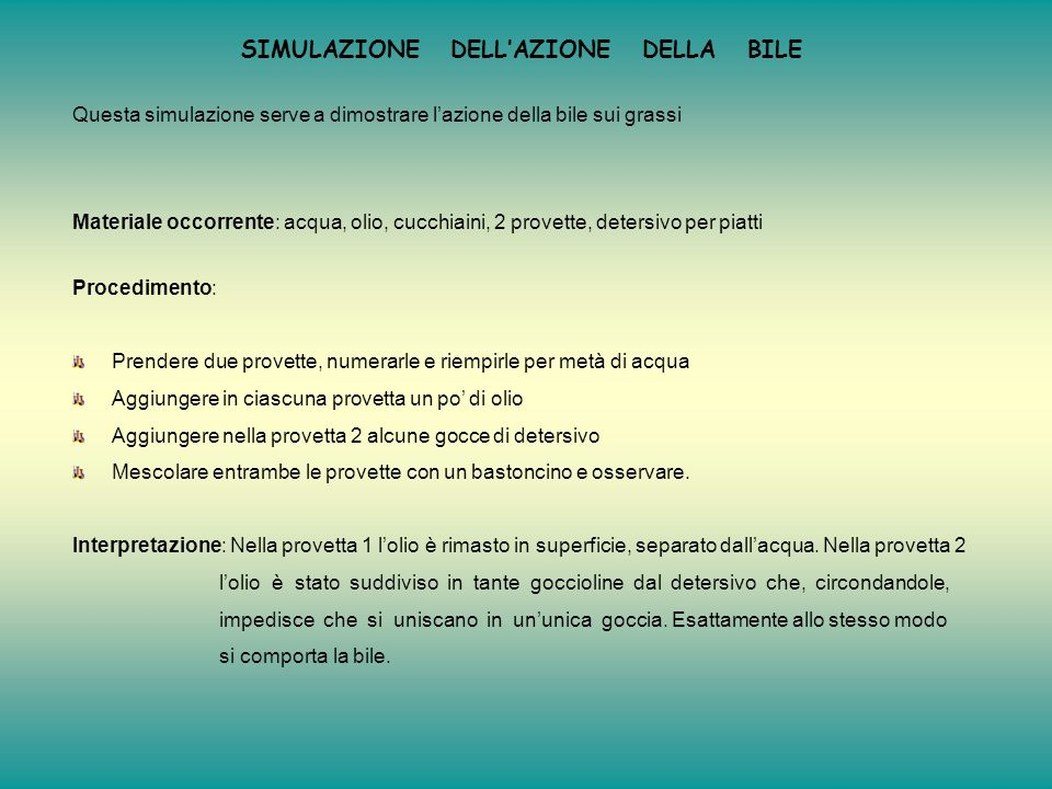 SIMULAZIONE DELL'AZIONE DELLA BILE