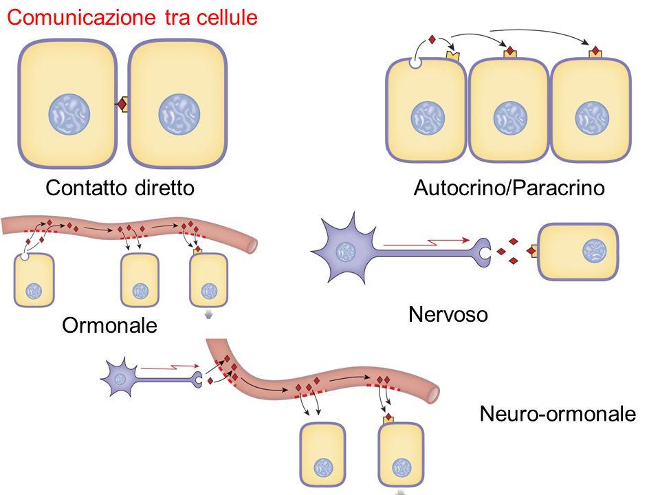 Comunicazione tra cellule