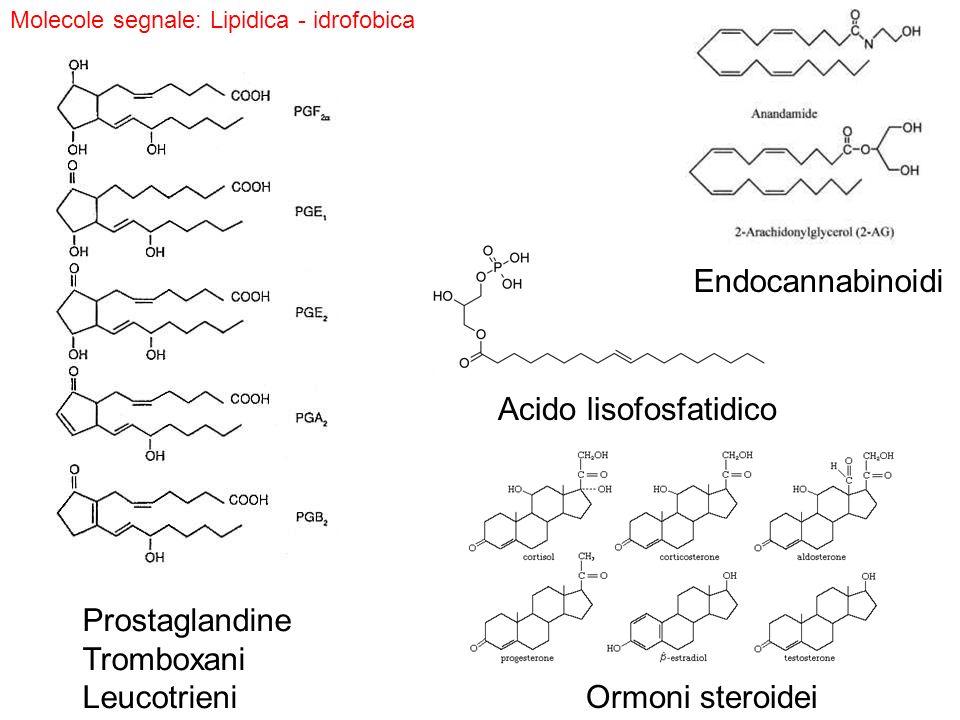 Acido lisofosfatidico