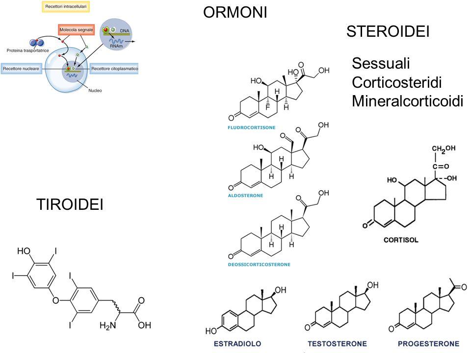 ORMONI STEROIDEI Sessuali Corticosteridi Mineralcorticoidi TIROIDEI