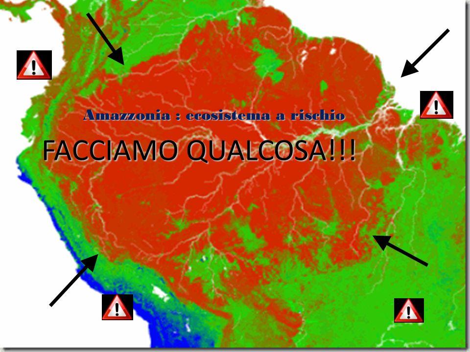 Amazzonia : ecosistema a rischio