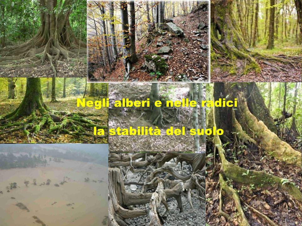 Negli alberi e nelle radici