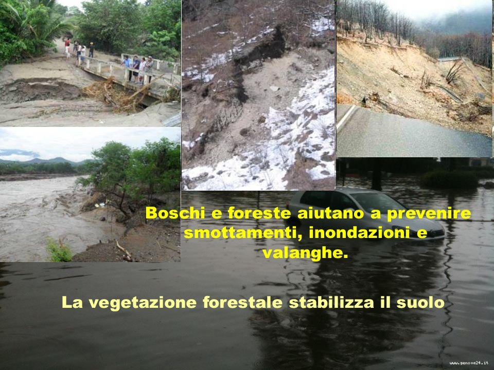 Boschi e foreste aiutano a prevenire smottamenti, inondazioni e valanghe.