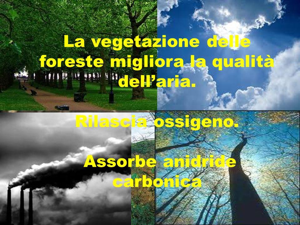 La vegetazione delle foreste migliora la qualità dell'aria.
