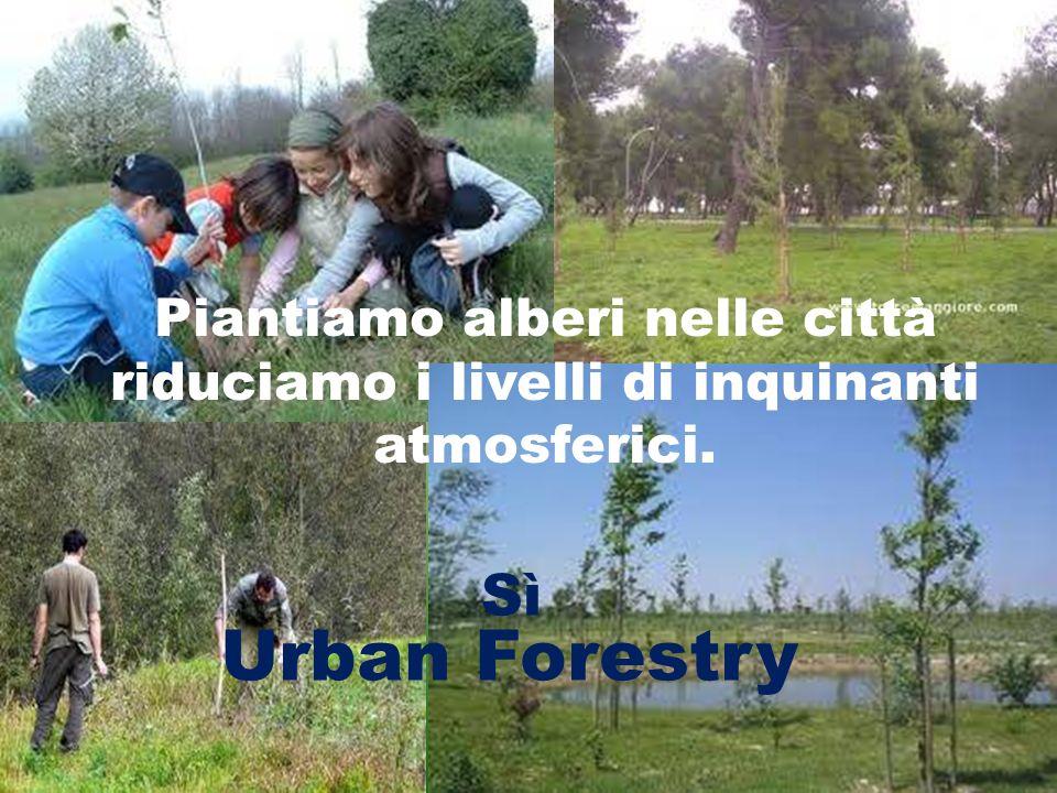 Urban Forestry Sì Piantiamo alberi nelle città