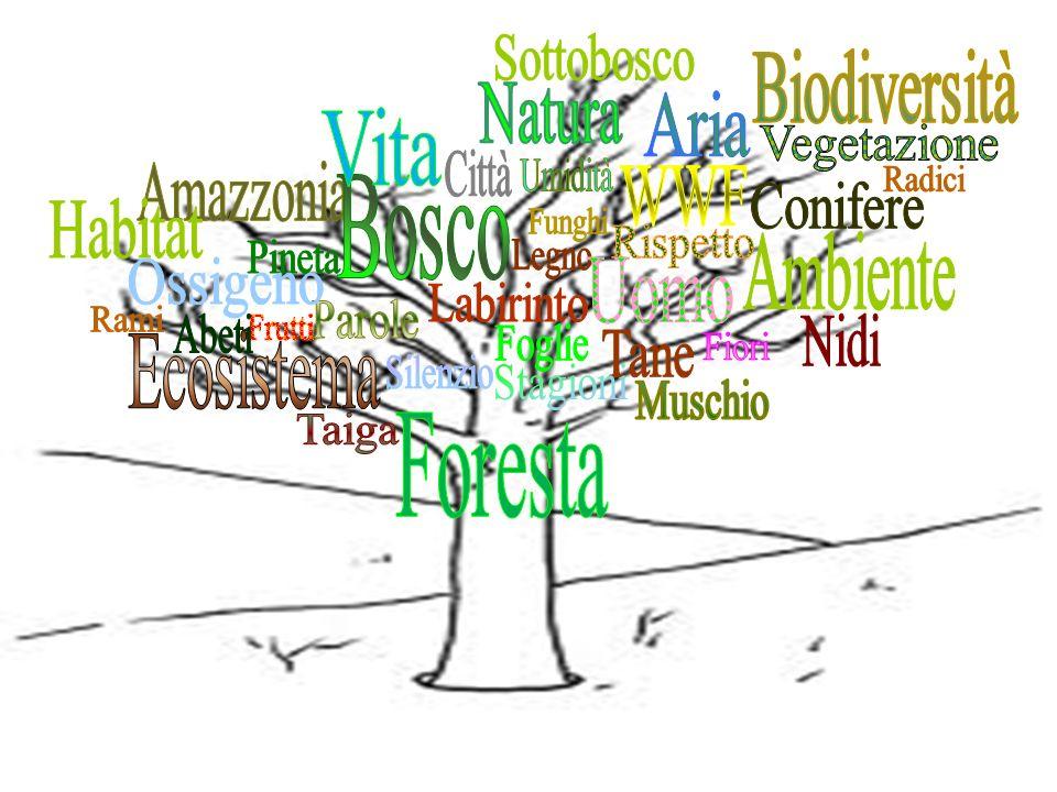 Sottobosco Biodiversità. Natura. Aria. Vita. Vegetazione. Città. Amazzonia. Umidità. WWF. Radici.