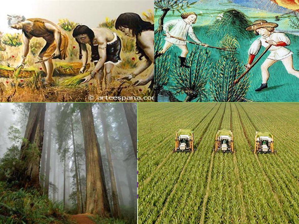 Con lo sviluppo dell'agricoltura e della pastorizia le popolazioni primitive smettono di essere nomadi e danno vita ai primi villaggi stabili su palafitte, utilizzando gli alberi.