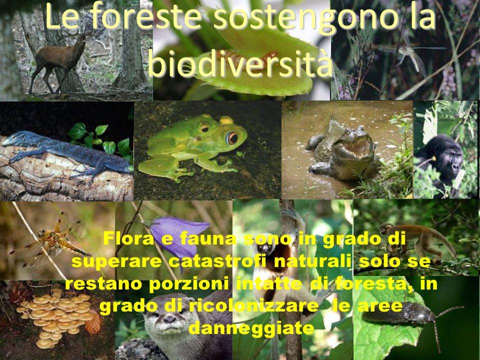 Le foreste sostengono la biodiversità