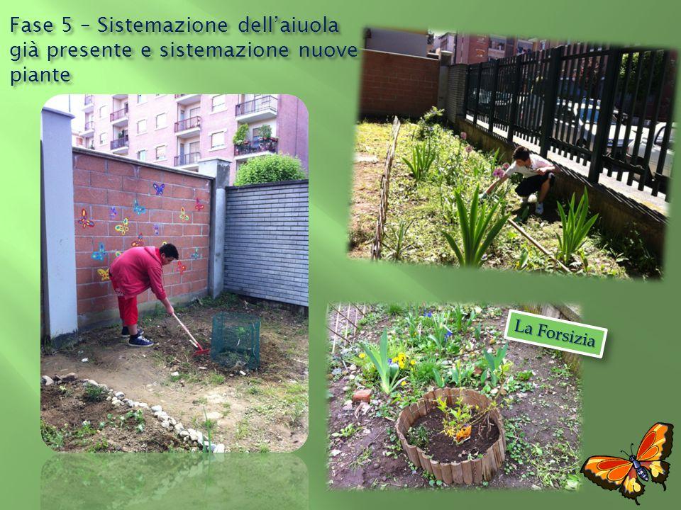 Fase 5 – Sistemazione dell'aiuola già presente e sistemazione nuove piante