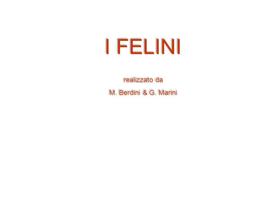 I FELINI realizzato da M. Berdini & G. Marini
