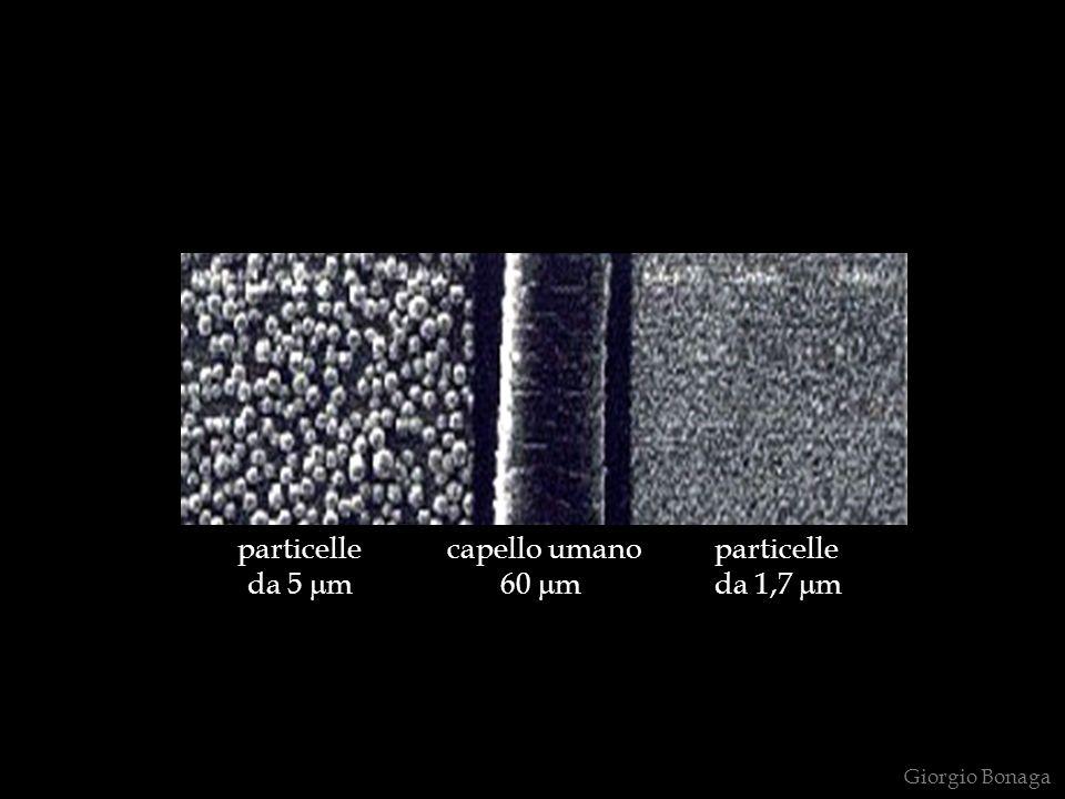 particelle capello umano particelle