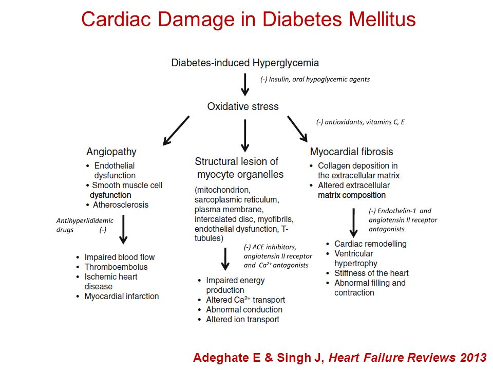 Cardiac Damage in Diabetes Mellitus