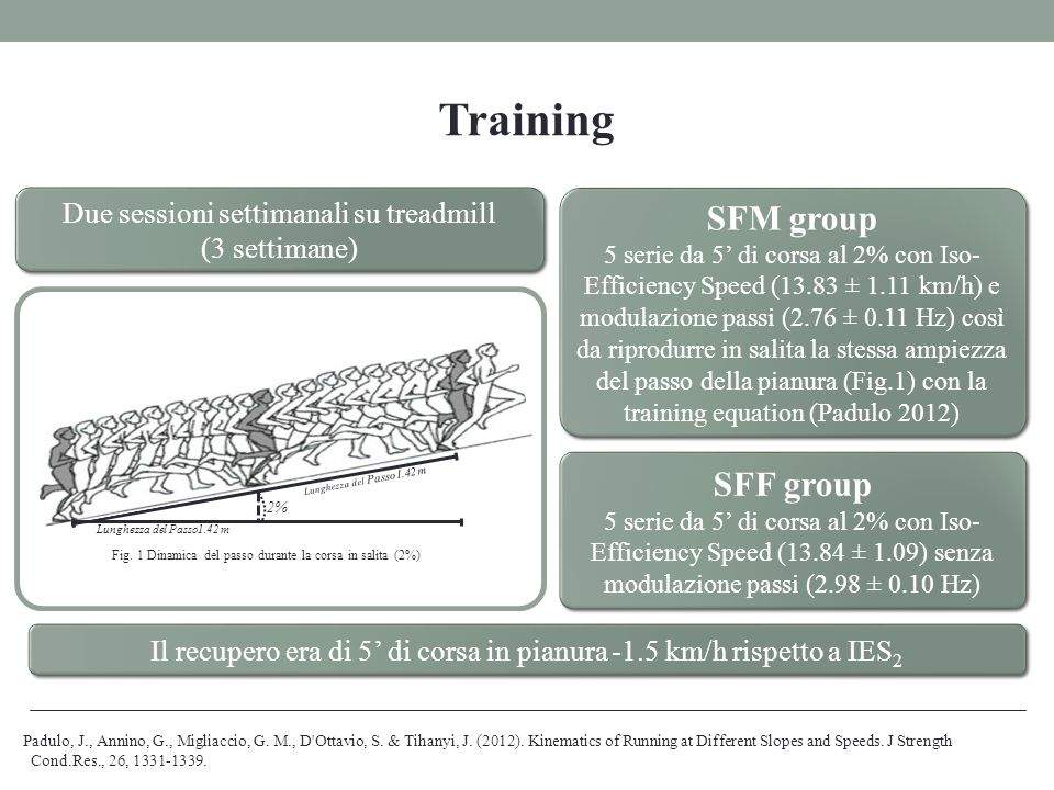Training SFM group SFF group Due sessioni settimanali su treadmill