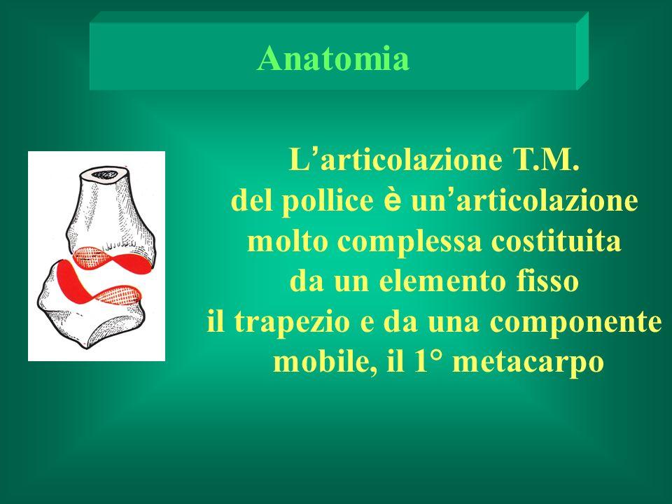 Anatomia L'articolazione T.M.