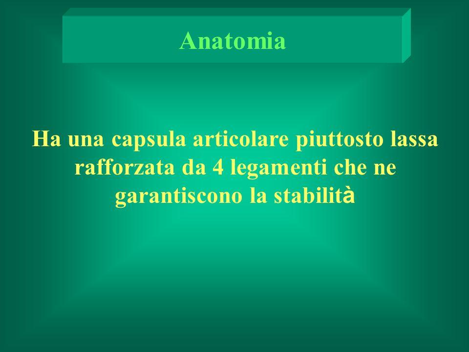 Anatomia Ha una capsula articolare piuttosto lassa rafforzata da 4 legamenti che ne garantiscono la stabilità.