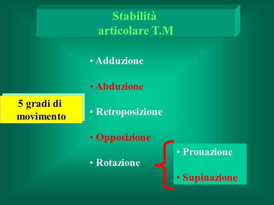 Stabilità articolare T.M