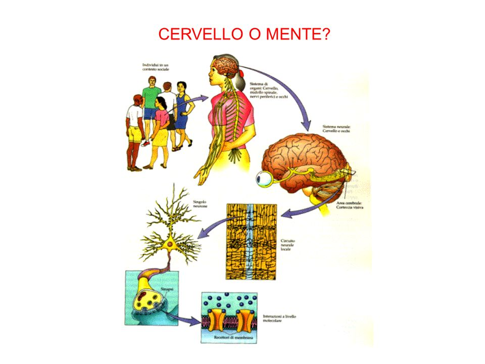 CERVELLO O MENTE
