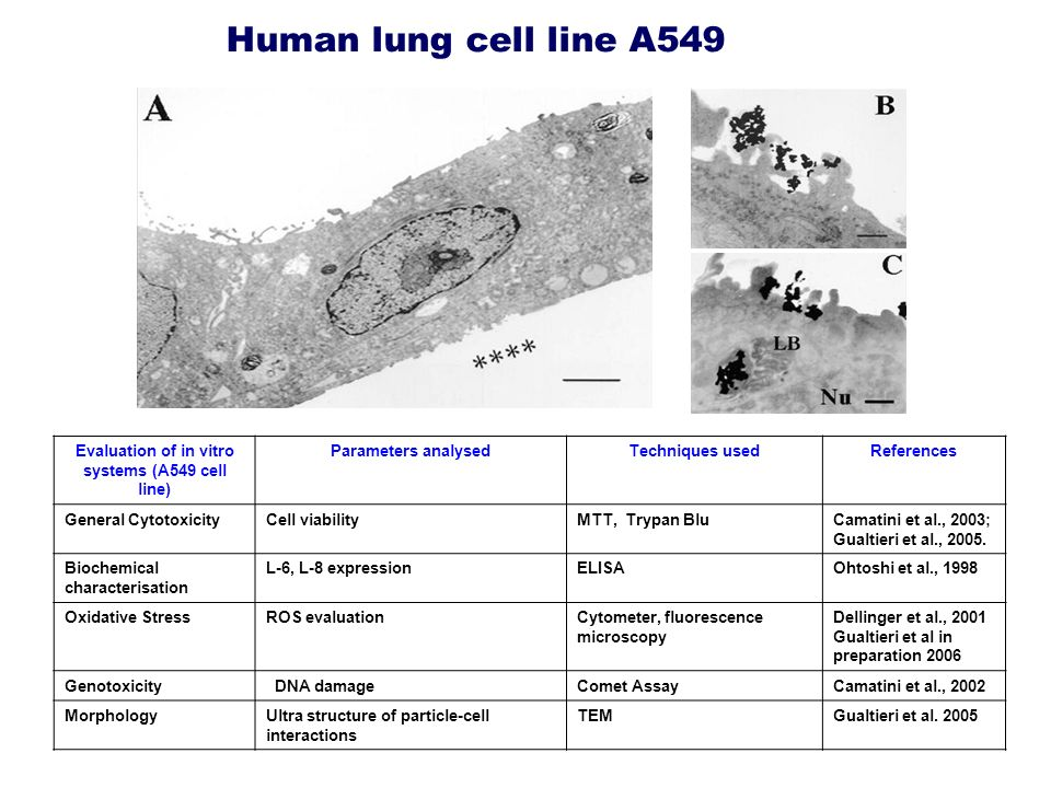 Evaluation of in vitro systems (A549 cell line)