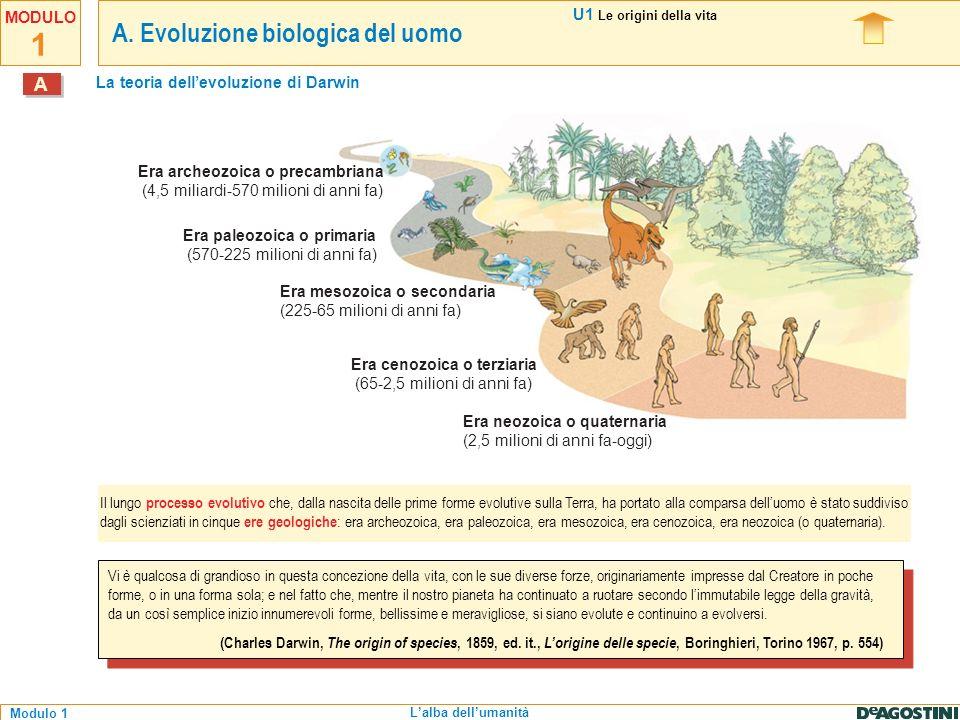 La teoria dell'evoluzione di Darwin