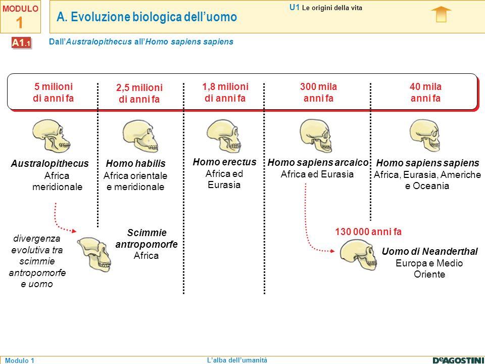 Dall'Australopithecus all'Homo sapiens sapiens