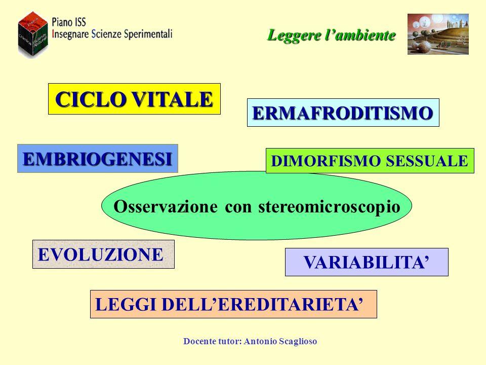 Osservazione con stereomicroscopio Docente tutor: Antonio Scaglioso